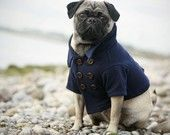 Really, what's not to love about a pug in a pea coat?
