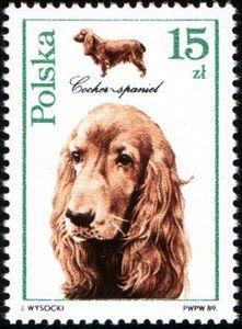 Poland 2901 Dogs Cocker Spaniel 1989 in Europe > Poland Postage Stamp Art, English Cocker Spaniel, Vintage Dog, Vintage Stamps, Dog Portraits, Art Journal Inspiration, Stamp Collecting, Pet Birds, Mammals