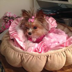 Yorkie Dogs, Yorkies, Cute Baby Dogs, Cute Babies, Animals Kissing, Yorkshire Terrier, Dog Mom, Cute Pictures, Adorable Animals