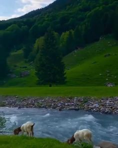 Top 10 Tourist Attraction To Visit in Switzerland - Tour To Planet Beautiful Photos Of Nature, Beautiful Nature Wallpaper, Beautiful Places To Travel, Nature Pictures, Amazing Nature, Beautiful Landscapes, Beautiful World, Beautiful Natural Places, Beautiful Nature Photography