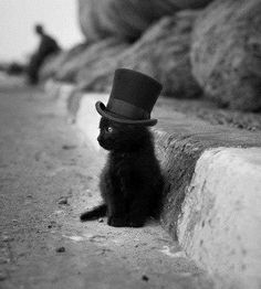 Blach hat cat