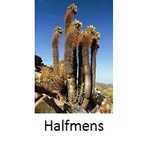 Plants in the Succulent Karoo have adapted to gain energy and nutrients from very dry conditions. Animals in this biome has also adapted to. Biomes, Biology, Succulents, Survival, Water, Plants, Pictures, Animals, Outdoor