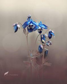 """좋아요 2,658개, 댓글 33개 - Instagram의 TRANSFER VISIONS Flowers(@tv_flowers)님: """"Presents . Featured Artist: @bellluha Congratulations! ________________________________________ ▪…"""""""