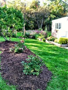 Mulching time in #autumn .. can't wait to watch the rose  bed grow outside of my greenhouse landscape project.