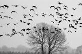 Vogelbeobachtung Schwarz und Weiss - JUSTART, Atelier2f.de  #justart #atelier2f.de #wall art #bird #goose #black #white #home #decor #tree #landscape