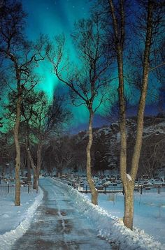 Wintery Night ~ Northern Lights