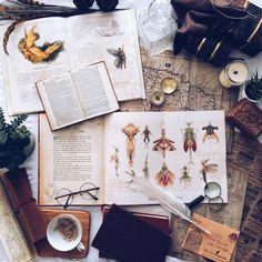 Just a little study on Sprites today bookstagram Astro Tarot, Death Of A Bachelor, Tarot Astrology, Dream Boy, Tarot Decks, Deck Of Cards, Botanical Illustration, Fantastic Beasts, Bookstagram