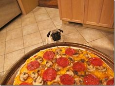 Big Pizza, Little Pug