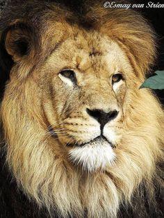 Magnificent boy!!