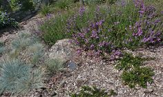 xeriscape photos   Leave a Reply Cancel reply