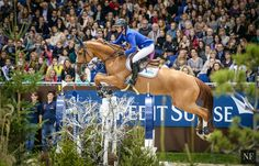 Horse Tack & Gear | zloija: Penelope Leprevost & Flora de Mariposa ...