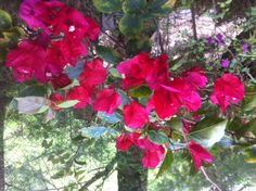A. Primavera vermelha rouba a cena !!!!