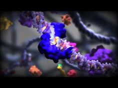 Wiggly-jiggly animation that beautifully depicts the regulation of genes by transcription factors, which it doesn't really explain, but hey, wiggle-jiggle.