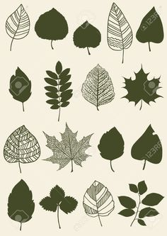 22868836-Herbarium-of-the-different-green-leaves-Stock-Vector.jpg (919×1300)