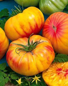 Tomate 'Ananas' Mes préférées. My favorites.