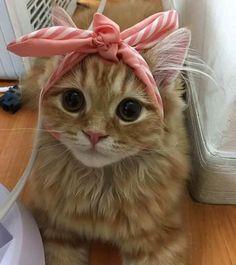 Beautiful bow on a beautiful cat...!