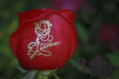 Happy Birthday To Garfield! Do you think he had lasagna instead of birthday cake? www.speakingroses.com