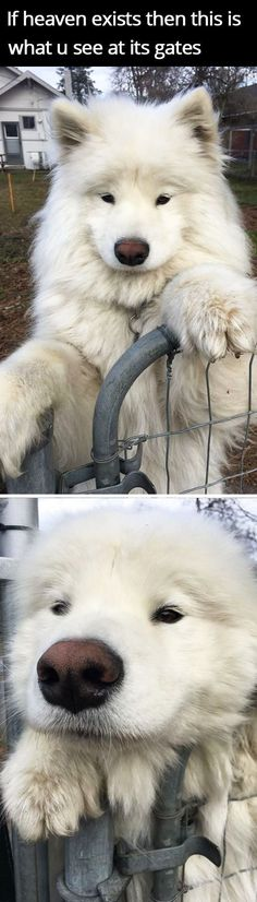 No matter how bad your day is, knowing that you'll come back home to your sweet dog makes everything better - especially if your dog is as hilarious as these pooches in this list below! http://postkitty.com/funny-dog-photos #funnydogs