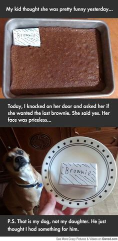 have a brownie