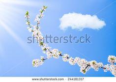 Niebo Chmury Jablon zdjęć stockowych, obrazów i zdjęć | Shutterstock