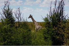 Chobe Nationalpark Botswana und Victoriafalls Zambia-3a