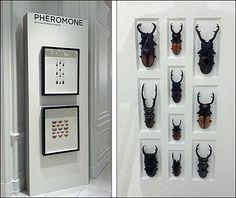 Christopher Marley Pheromone Bugs in Beetles and Bugs Sell Luxury Items Christopher Marley, Insect Wings, Beetle Bug, Window Dressings, Beetles, Fashion Branding, Visual Merchandising, New Trends, Closets