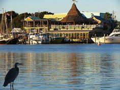 AJ's on the Harbor Destin, FL