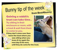 Bunny tip - week 18. Gaining your rabbit's trust can take time... Here is a great way to become your bunnies best friend.