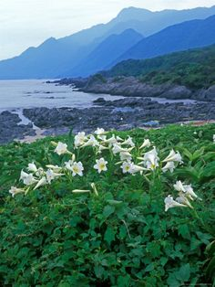 Beautiful Yakushima - http://www.travelandtransitions.com/destinations/destination-advice/asia/