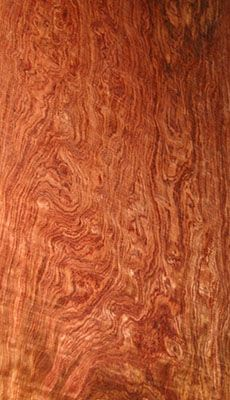 Wood Grain: Bubinga, the grain in this log almost looks like water Wood Slab, Wood Veneer, Got Wood, Wood Stone, Wood Tools, Wood Patterns, Picture On Wood, Woodworking Wood, Wood Texture