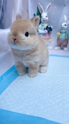 Animals And Pets Videos Bunnies Cute Baby Bunnies, Baby Animals Super Cute, Cute Baby Dogs, Cute Dogs And Puppies, Cute Little Animals, Cute Funny Animals, Cute Cats, Funny Bunnies, Cutest Bunnies