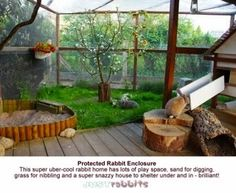 Rabbit Rescue Sanctuary: Mozzie proof Rabbit Enclosures
