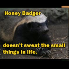 """honey badger speech Narrator of the viral """"honey badger"""" video, christopher gordon, joins ari melber  to discuss his recent victory in a trademark court case."""