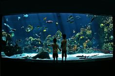 Tropical fish checking out a couple of young humans at the Minnesota Zoo coral reef aquarium Wall Aquarium, Acrylic Aquarium, Aquarium Design, Reef Aquarium, Cool Fish Tanks, Saltwater Fish Tanks, Saltwater Aquarium, Minnesota, Aquarium Pictures