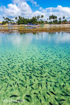 O que fazer em Porto de Galinhas, no litoral de Pernambuco. Confira os principais pontos turísticos de uma das praias mais lindas do Brasil