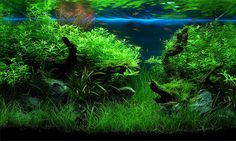 "1st place aquatic garden small and best of show: 32 liters (8 gallons)    ""Secret Garden"" by Justin Law, Hong Kong"