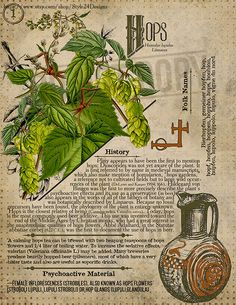 Hops 1 Book of Shadows page Ritual Poisonous Plants