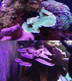 wyswyg 6 For $49.99 A Great Variety Of Models Energetic 6 Frag Pack