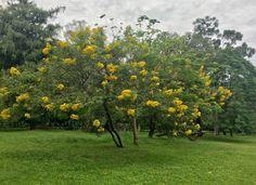 Jardín botánico de Asunción-Paraguay