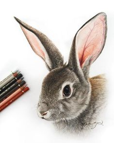 Sweet drawings of animals, that look like the real thing. Robin Gan is a Graphic Designer and an excellent hyper realistic artist. He also adds a bit of fun and Rabbit Drawing, Rabbit Art, Bunny Rabbit, Animal Sketches, Drawing Sketches, Art Drawings, Horse Drawings, Drawing Tips, Realistic Animal Drawings
