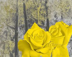 Pair og Roses - Yellow Floral Wall Art Photography Home Decor Picture Living Room Bedroom. Watermark will be removed from picture............................. Please remember that colors may vary slightly from monitor to monitor At your request, we will customize the decor color at no additional cost. ...............................................Matted-pictures.............We use professional non-glare Premium Luster photo paper Our 11 x 14 Mat has a 8 x 10 Photo in the center and this...