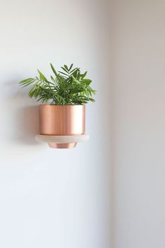 Congratulations you did it! You found a way to have plants *and* save space.