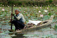Lac de lotus -  Kampong Cham, Cambodia