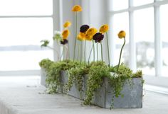 How-to: Ranunculus Row
