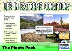 Discover the wonderful world of plants with our fantastic collection of teaching, activity and classroom display resources. Includes a child-friendly guide to plant growth, pollination, photosynthesis, classification, adaptation and much more! Science Curriculum, Science Resources, Activities, Plant Growth, Classroom Displays, Photosynthesis, Extreme Weather, All Plants, Water Features