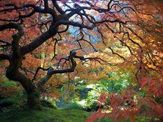 Japanese Gardens in Portland OR
