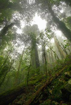 foggy dream...pacific northwest...