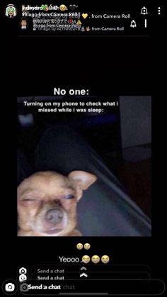 Funny Video Memes, Crazy Funny Memes, Funny Animal Memes, Really Funny Memes, Cute Funny Animals, Stupid Funny Memes, Funny Tweets, Funny Relatable Memes, Haha Funny