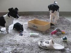 Hundetrick: Aufräumen