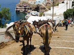 Santorini - The Unique Volcanic Island Of Greece Santorini Island, Greece Islands, Horses, Donkeys, Vacation, Unique, Travel, Animals, Animales